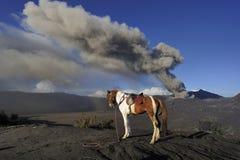 Pferd für Miete am Berg Bromo lizenzfreies stockfoto