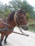 Pferd für tägliche Bauernhofarbeit Lizenzfreie Stockfotos