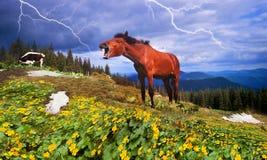 Pferd feiert Stockfotos