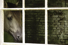 Pferd am Fenster Lizenzfreie Stockbilder