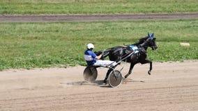Pferd am Galopp auf Rennstrecke stock video footage