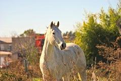 Pferd geben auf einem Feld in Argentinien frei Lizenzfreies Stockfoto