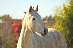 Pferd geben auf einem Feld in Argentinien frei Lizenzfreie Stockbilder