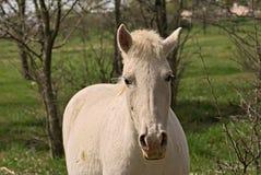 Pferd geben auf einem Feld in Argentinien frei Stockfoto