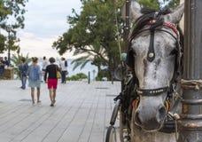 Pferd gebunden Lizenzfreies Stockfoto