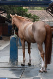 Pferd gebunden am blauen Beitrag stockfotografie