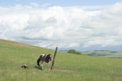 Pferd gebunden an einem Pfosten lizenzfreie stockfotografie