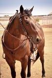 Pferd gekleidet Stockfoto