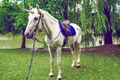 Pferd gekleidet als Einhorn mit dem Horn Ideen für photoshoot hochzeit Party outdoor lizenzfreie stockfotografie