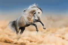 Pferd gelaufen in Staub stockfotos