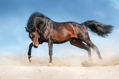 Pferd gelaufen in Wüste stockfotografie