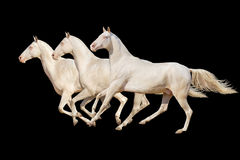 Pferd getrennt auf Schwarzem Lizenzfreies Stockfoto