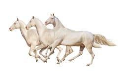 Pferd getrennt auf Weiß Stockfotografie