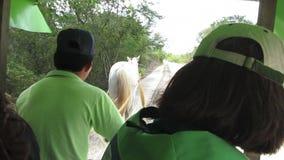Pferd gezeichnete Warenkorb-Fahrt zum Cenotes stock footage