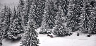 Pferd gezeichneter Schlitten auf Schnee Stockfoto