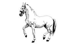 Pferd gezeichnetes Schwarzweiss Stockbild
