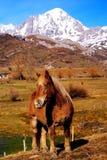 Pferd hallo in der natürlichen Umgebung. Stockfoto