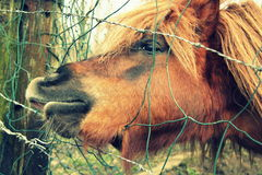 Pferd hinter dem Zaun Lizenzfreie Stockfotografie