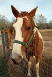 Pferd hinter einem Zaun Lizenzfreie Stockfotos