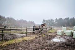 Pferd hinter einem Zaun an einem Bauernhof Stockfotografie