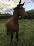 Pferd hinter einem Zaun stockfotos