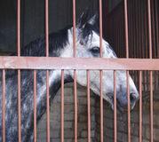Pferd hinter Stäben Lizenzfreies Stockfoto
