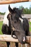 Pferd in Ihrer Hürde Stockbilder