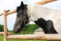 Pferd in Ihrer Hürde Stockbild