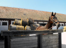 Pferd im Bauernhof. Stockfoto