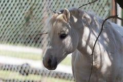 Pferd im Bauernhof Stockfotografie