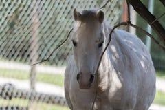 Pferd im Bauernhof Lizenzfreies Stockfoto