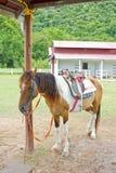 Pferd im Bauernhof. Stockfotografie