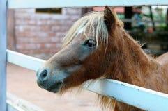 Pferd im Bauernhof Lizenzfreies Stockbild