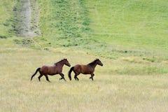 Pferd im Berg Stockfotos