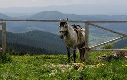 Pferd im Berg Schöne natürliche Landschaft stockfotografie