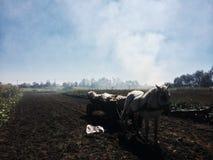 Pferd im Dorf Stockbilder