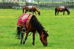 Pferd im Grasland Stockbild