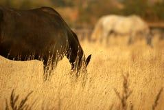 Pferd im Grasland Stockfotos