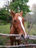 Pferd im Holz stockbilder
