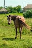 Pferd im Land Stockfotos