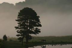Pferd im Morgen-Nebel Lizenzfreies Stockbild