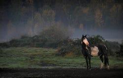 Pferd im Nebel Lizenzfreies Stockfoto