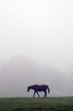 Pferd im Nebel Stockfotografie