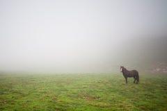Pferd im Nebel Stockbild