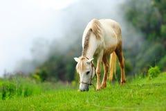 Pferd im Nebel Stockfoto