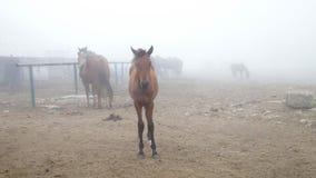 Pferd im Nebel stock video