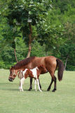 Pferd im Park lizenzfreie stockfotografie