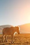 Pferd im schönen Sonnenaufgang Stockfotografie