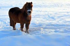 Pferd im Schnee Stockfotografie