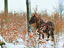 Pferd im schneebedeckten Wald Lizenzfreie Stockbilder